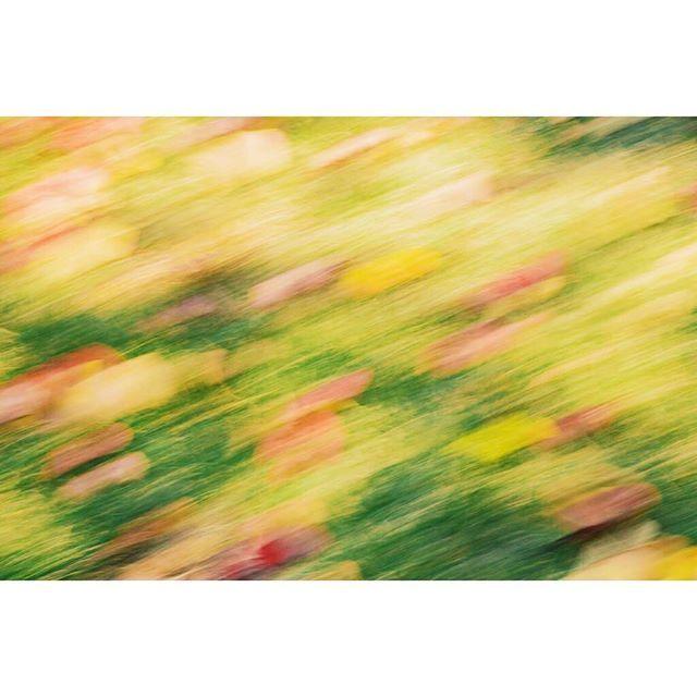 【iris_saito】さんのInstagramをピンしています。 《↟↟秋の気配↟↟ ハーバルビレッジ👫🌿 #nature #写真  #japan #写真部 #instafollow #followme #写真展 #写真好きな人と繋がりたい #夕日 #sunset #mountains #landscape #travel #山 #自然 #outdoors #instajapan #福井 #高浜 #北陸 #autumn #森林 #秋 #colorful #緑 #forest #フィルム #森 #film#紅葉》