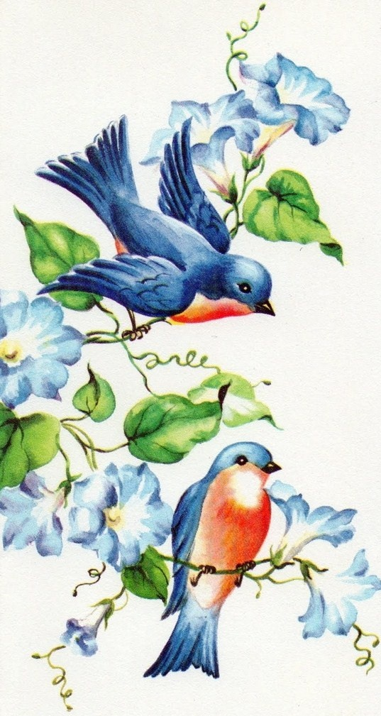 Casal de pássaros