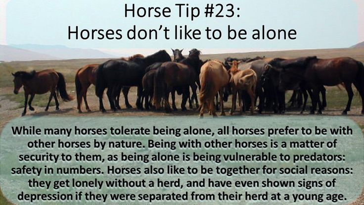 Horse tip Tuesday  #equihealthcanada #horse #firstaid #horses #ehc #tiptuesday