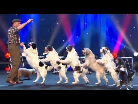 WOLFGANG LAUENBURGER - DRESSAGE CHIENS - LE PLUS GRAND CABARET DU MONDE | http://pintubest.com