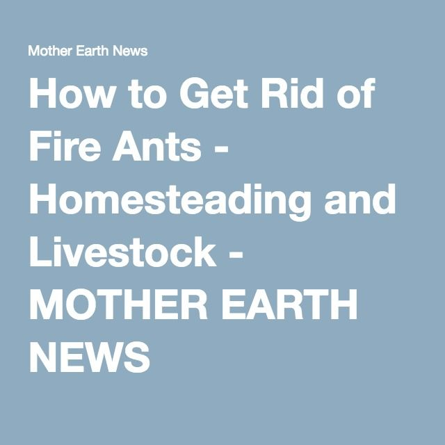 How to Get Rid of Fire Ants - Homesteading and Livestock - MOTHER EARTH NEWS