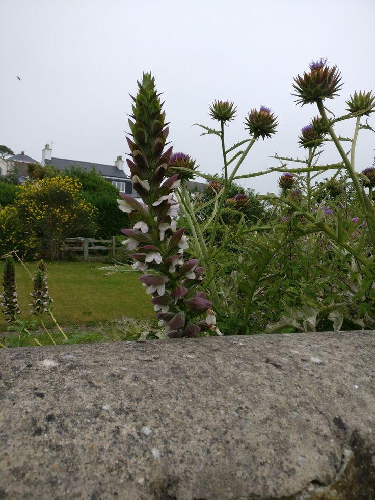Pin by Hanna Robbins on Garden Plants, Garden