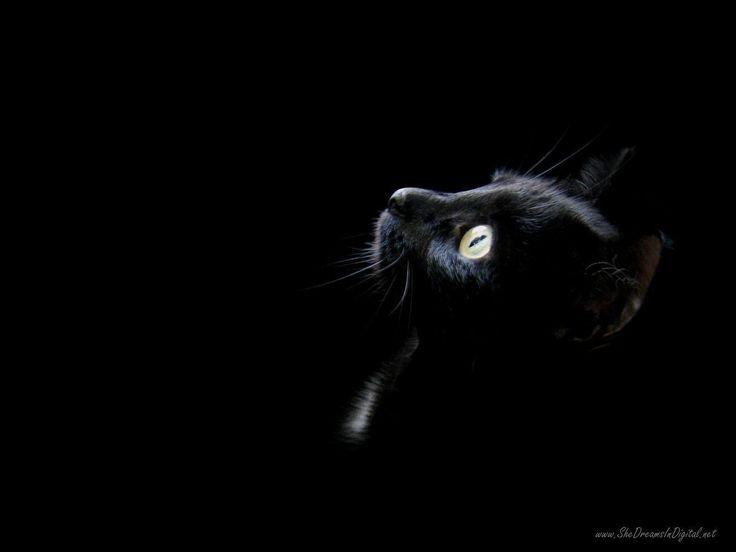 Schwarze Katze coole Tapete #cat #cats #kitty #kittens #catlover #ca