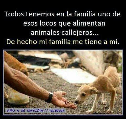 Loca X Ayudar Frases Cute Dogs Animals Y Dog Love