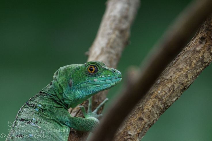 Zoo Augsburg IV by grill_catering. @go4fotos