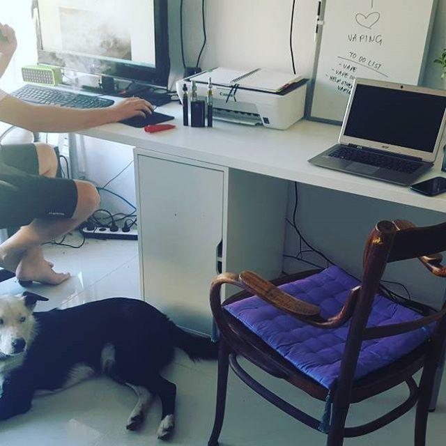 The pet friendly office @vaporaecigs #pets #petfriendly #homeoffice #vaporgram #instavape #officespace #dogsofinstagram #vapedog #vapelyfe #vapelife #vaping #vapeshop #ecigs #aussievapers #vaporaecigs