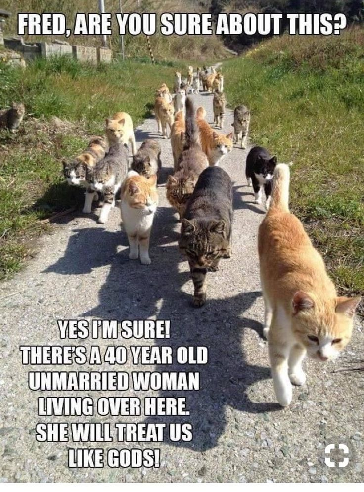 Funny Cat Memes Of The Day – 43 Pics Ep23 #cat #catmemes – Lovely Animals Worl…