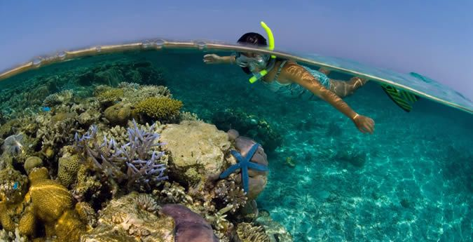Rowley Shoals Diving Tour | The Great Escape Kimberley Cruises – Experience Australia's beautiful reefs