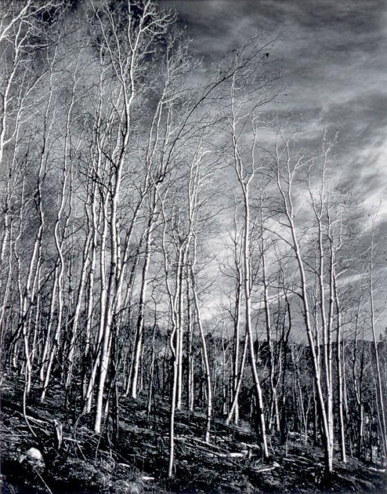 Aspen Valley, New Mexico, 1937, Edward Weston. (1886 - 1958)