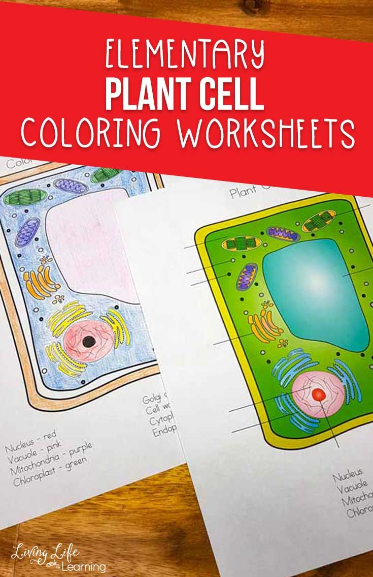 Plant Cell Coloring Worksheet With Images Elementary Science Activities Color Worksheets Science Activities For Kids [ 1135 x 735 Pixel ]