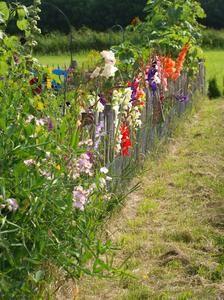 Die bunte Vielfalt der Gladiolen...