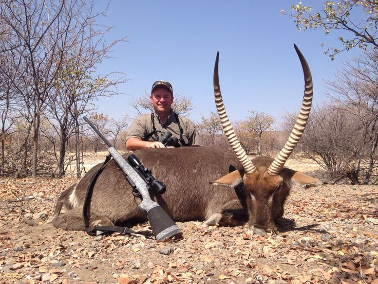 Nice waterbuck taken with HS Precision 7 mm Rem Mag and Swarovski Z6i.