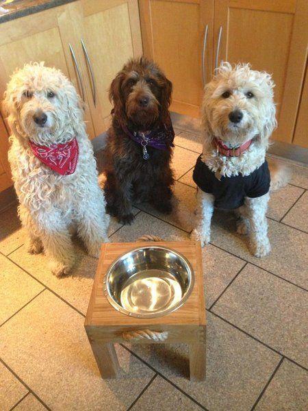 Raised pet feeding stations