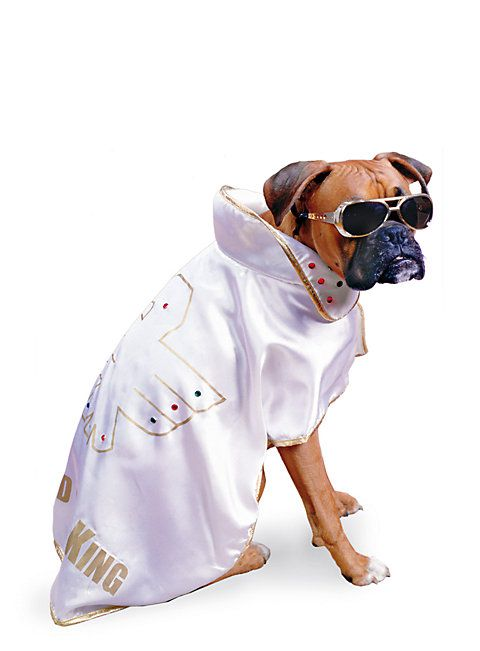 King of Rock Hundekostüm