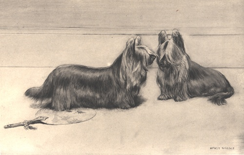 Two Paisley Terriers - now extinct