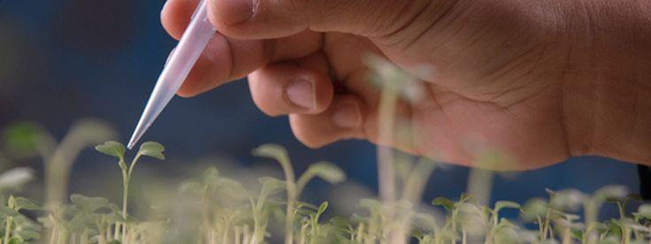 Apoyan a la investigación científica y tecnológica en bioseguridad y biotecnología
