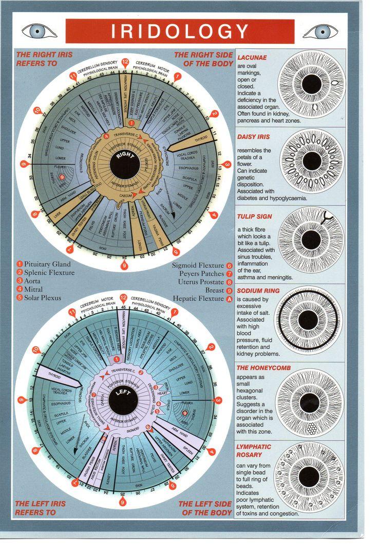 Iridology chart for eyes