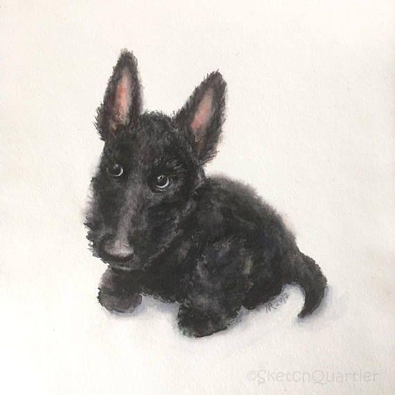 Scottie Puppy original watercolour painting. Dog art painting
