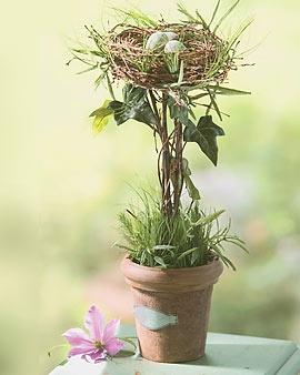 Bird's Nest Topiary