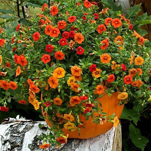 Imagem de jardinagem fazer recipiente de Decorações Qaeda - plantador de abóbora com ...
