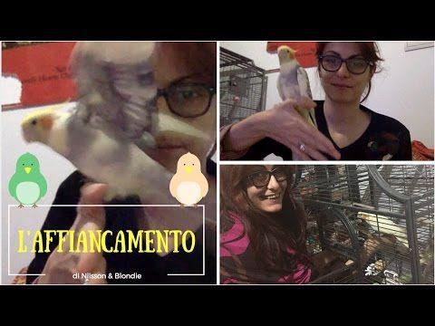 LA COPPIA PIÙ AMATA DELL'INTERNET 🐦 Affiancamento pappagalli!