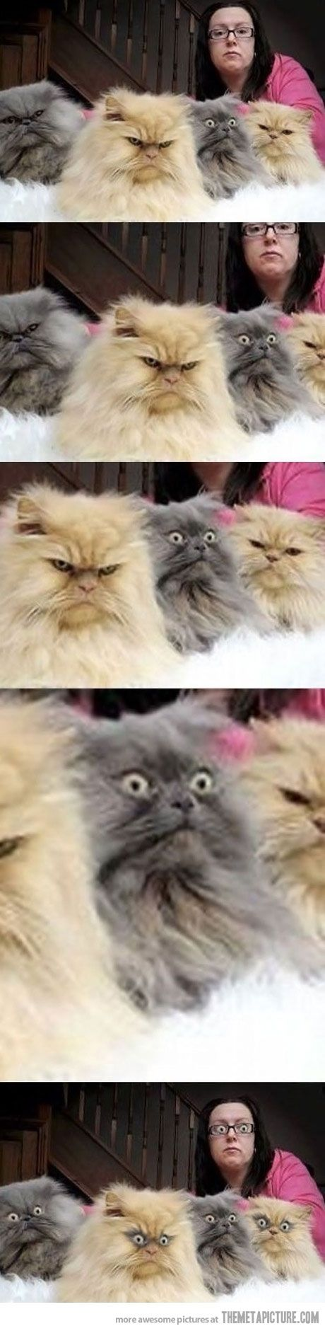 I'm not a cat person,but these are crackin me up with their little angry faces!