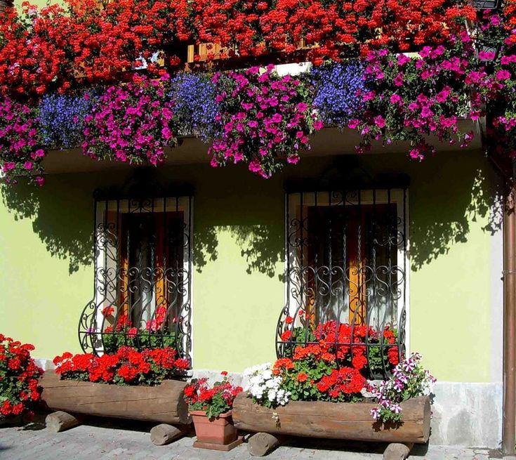 İtalya'da Çiçek balkon ve pencereler. Rus Servis Çevrimiçi Diaries - LiveInternet üzerine tartışma