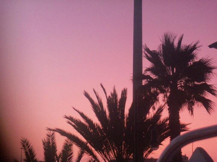 Palm trees + sunset!