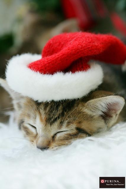 サンタさんまだかニャ?/猫 ネコ cats  (Nestle PURINA ネスレ日本)