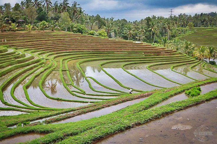 Bali Essentiel - Denpasar - Adresse, Avis, Téléphone & Tarif - TripAdvisor #bali_voyage #bali_rizieres #bali_rizieres_en_terrasse