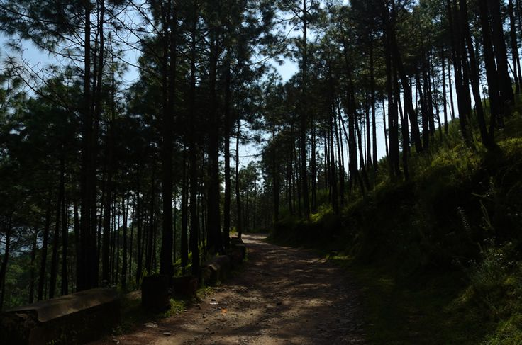 http://www.whitemushroomholidays.com/latest-holiday-offers/adventure-camps-in-kasauli-2nights-3days/ - Adventure Camps in Kasauli - Make memorable your adventure camps with family, offers you latest holiday package with 2N/3D at very affordable cost 6000. Call us on  +91-782-782-4444 for detail.