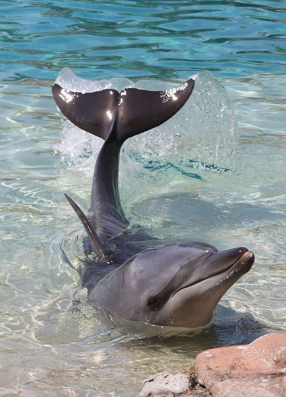 A most beautiful dolphin