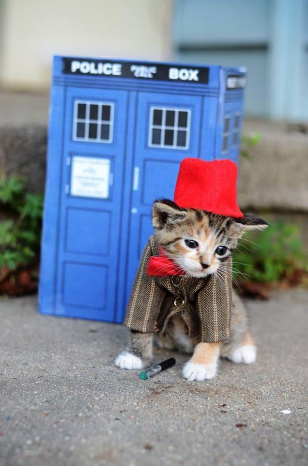 Whovian kitten!