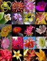 FLOWERING SUCCULENT MIX rare plant ex...