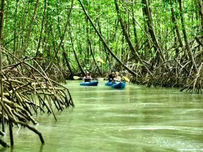 mangroves in Quepos, Costa Rica