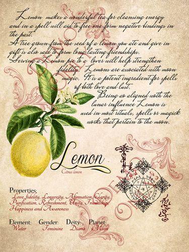 BOB ~ Lemon