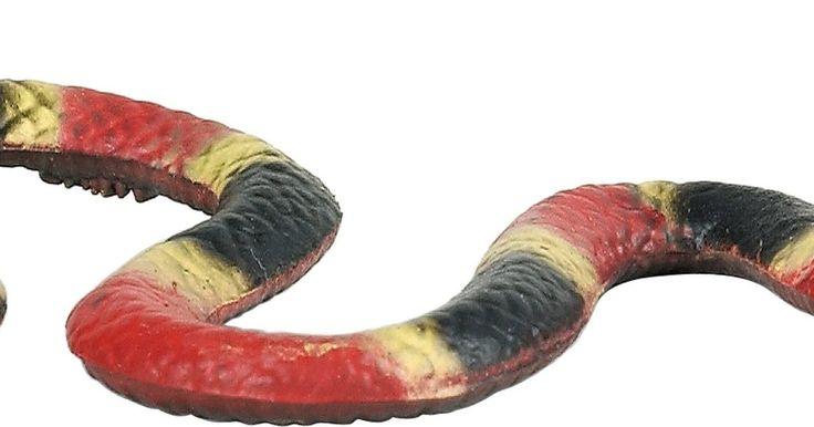 Tipos de serpientes en Carolina del Norte . Carolina del Norte tiene más de 30 especies diferentes de serpientes, que van desde la inofensiva serpiente de liga del este a la muy venenosa serpiente de coral oriental. Al tratar de identificar una especie de serpientes, toma notas detalladas y mantén una distancia prudente, ya que hay seis especies de serpientes venenosas que se encuentran en ...