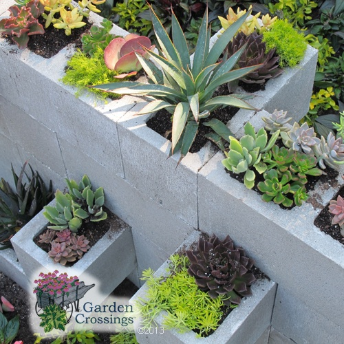 Cinder Blocks Filled With Succulents Making A Cool Wall