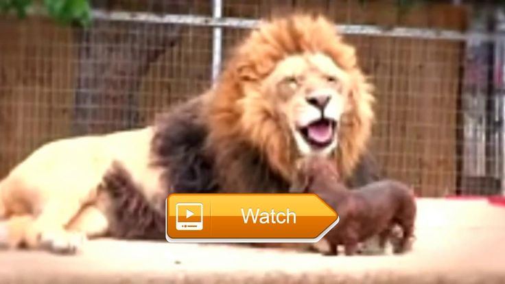 Cute Animals Funny Animals Dogs and cats  THIS video is made my me and spend several hours on this video I hope you guys like My videoTHE world best cute animals video subtitles cute images  on Pet Lovers