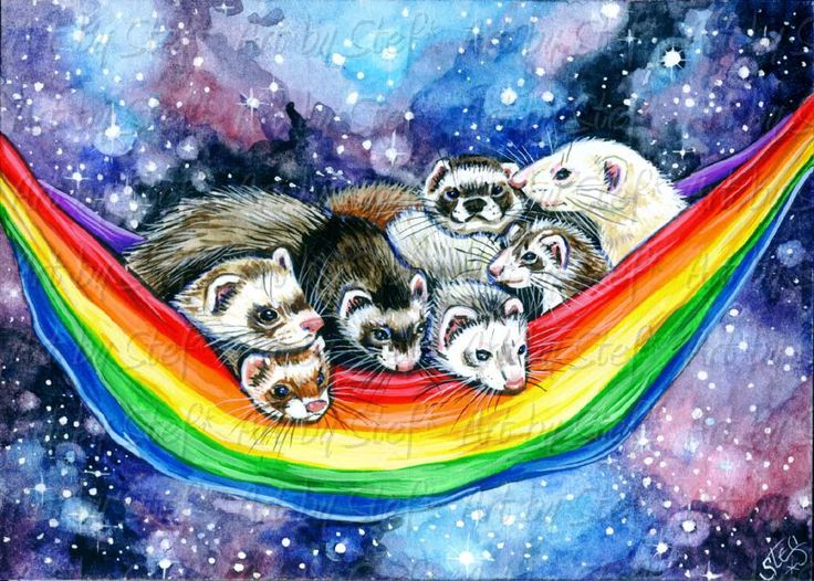 1000 Images About Ferrets Rock On Pinterest