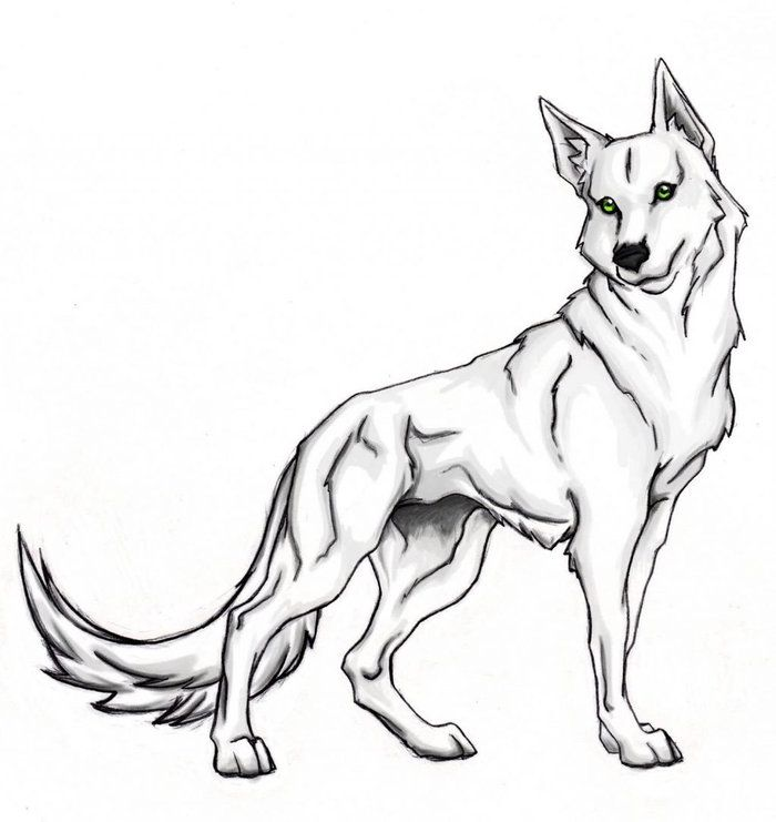 Animal Coloring Pages Wolf Animal Coloring Pages Wolf Colors Puppy Coloring Pages