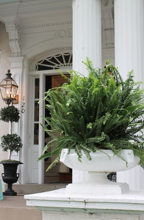 potted ferns| green and white front porch| southern charm