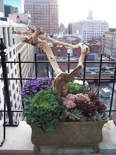 58 Best Images About Hypertufa Trough Planting On