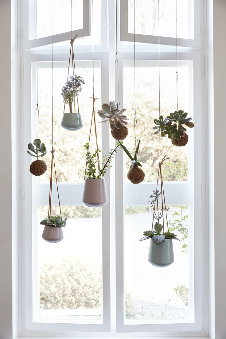 Plants | indoor plants + pots - simple macrame handing plants and succulents