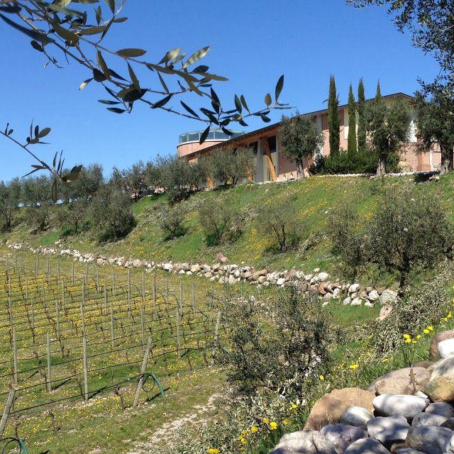 #ItaliainVino 6a tappa: il basso Garda ~ Viaggi e Delizie
