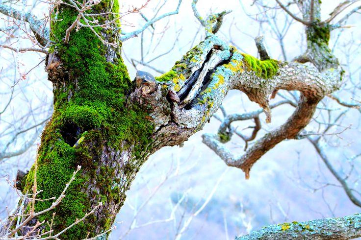 Monte Cucco's tree in winter - www.motette.it