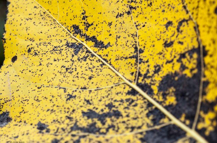 in arte, foglia by Clay Bass on 500px