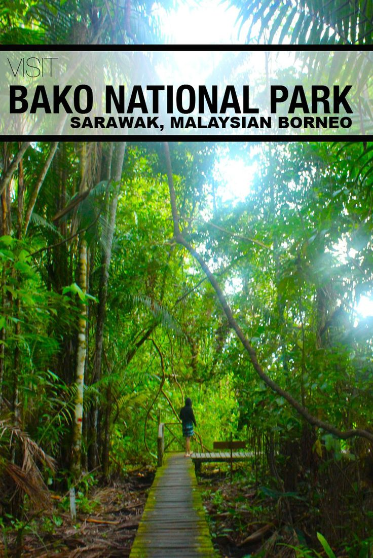 Want to visit the easiest park in Borneo? Come to Bako National Park!