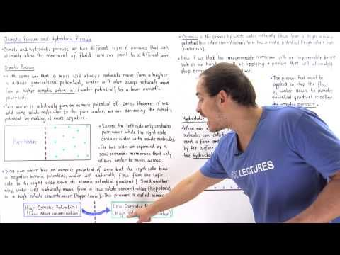 Osmosis, Osmotic Pressure and Hydrostatic Pressure - YouTube