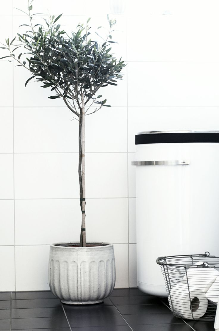 White tiles, black tiles, olive tree - perfection  | www.estmagazine.com.au #goinggreen #simpleliving